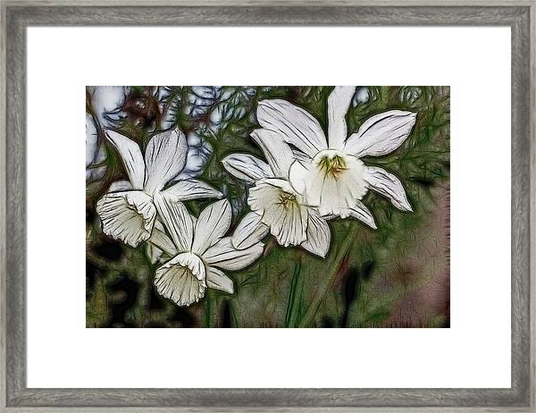 White Daffodil Flowers Framed Print