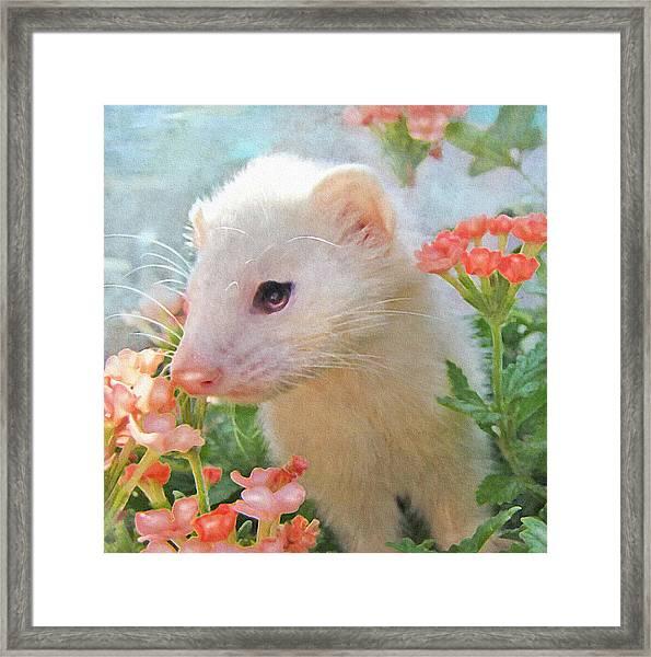 White Ferret Framed Print