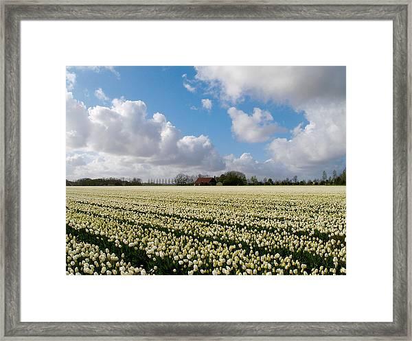 White Field Framed Print