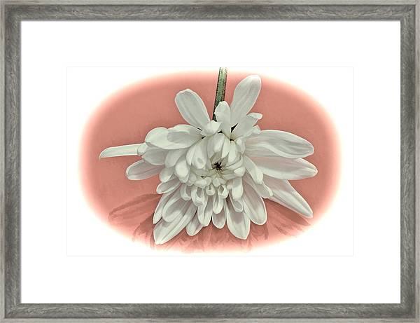 White Flower On Pale Coral Vignette Framed Print