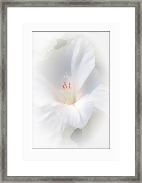 White Glad Framed Print