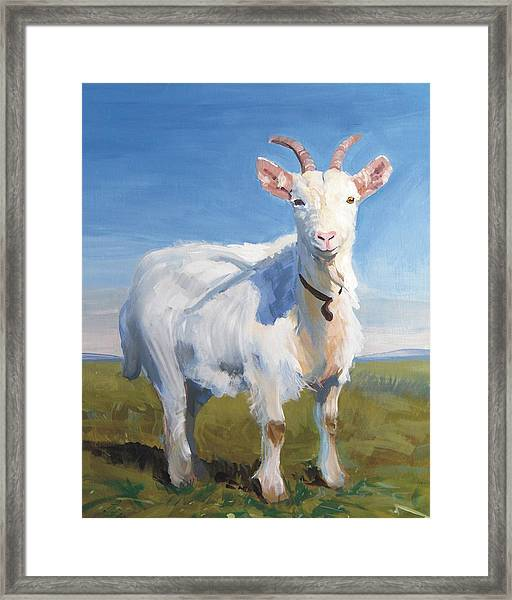 White Goat Framed Print