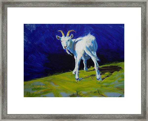 White Goat Painting Framed Print