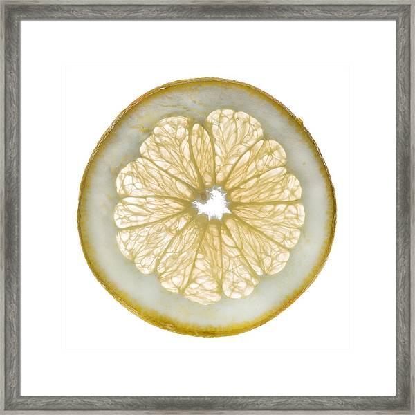 White Grapefruit Slice Framed Print