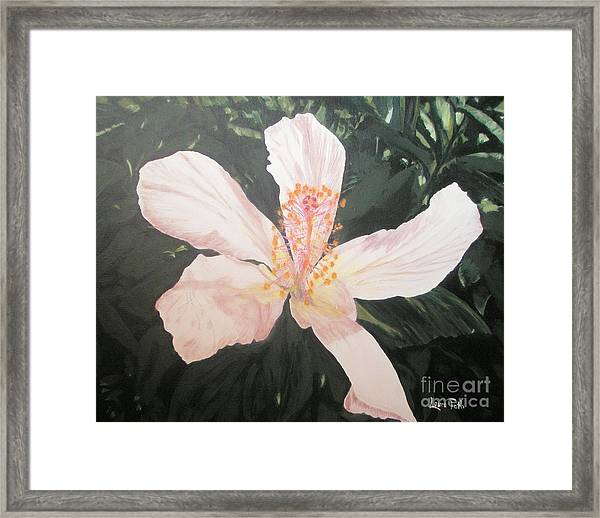 White Hibiscus In Acrylic Framed Print