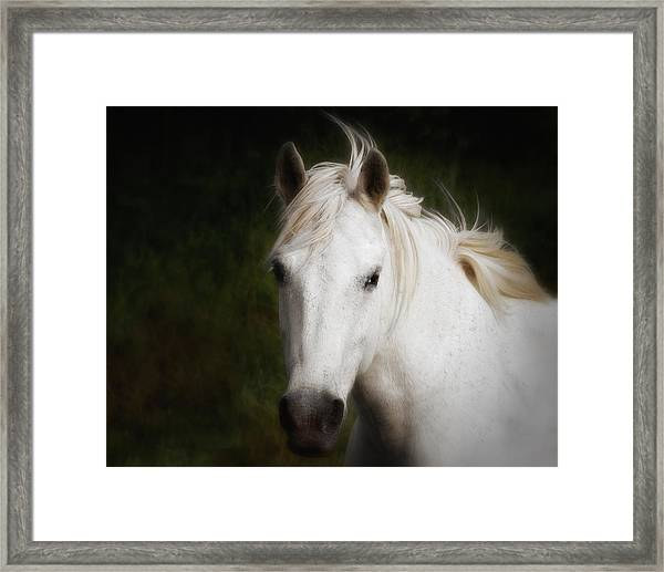 Framed Print featuring the photograph White Horse Of The Carmargue by Gigi Ebert