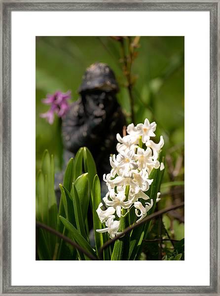 White Hyacinth In The Garden Framed Print