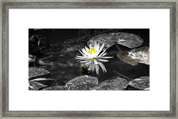 White Lilly Framed Print