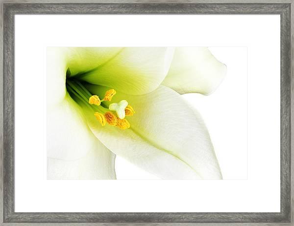 White Lilly Macro Framed Print