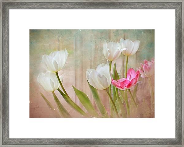 White Lily Show Framed Print