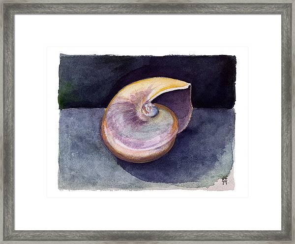 White Nautilus Framed Print