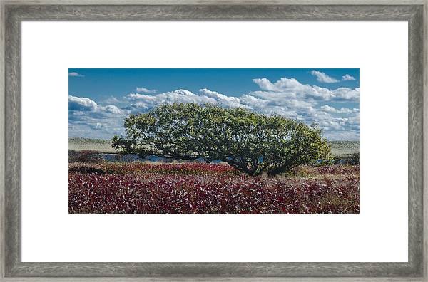 White Oak In Chilmark Framed Print