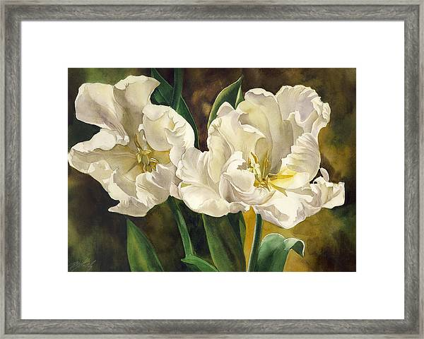 White Parrot Tulips Framed Print