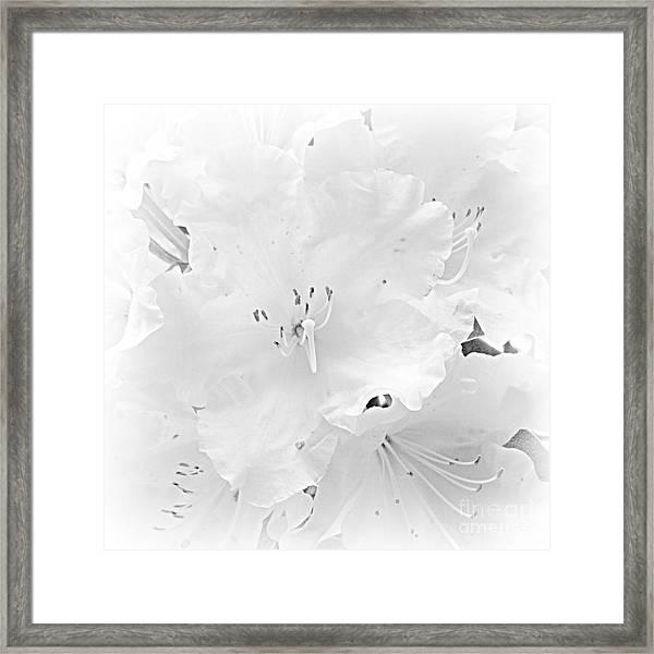 White  Rhoadie Framed Print