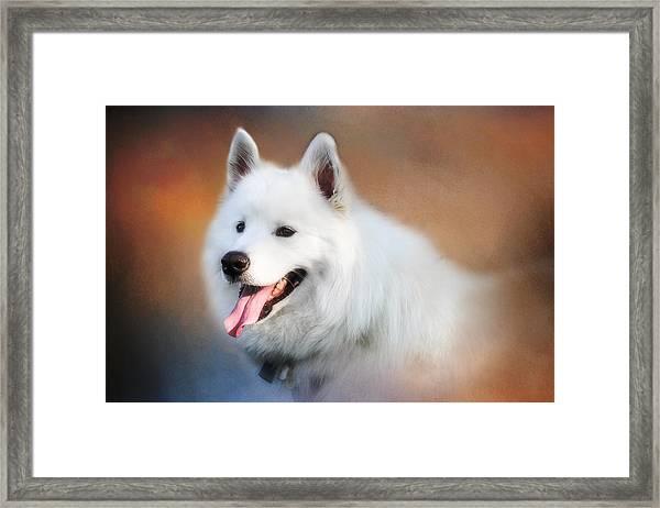 White Samoyed Portrait Framed Print