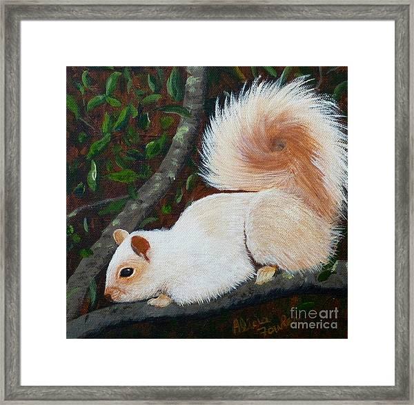 White Squirrel Of Sooke Framed Print