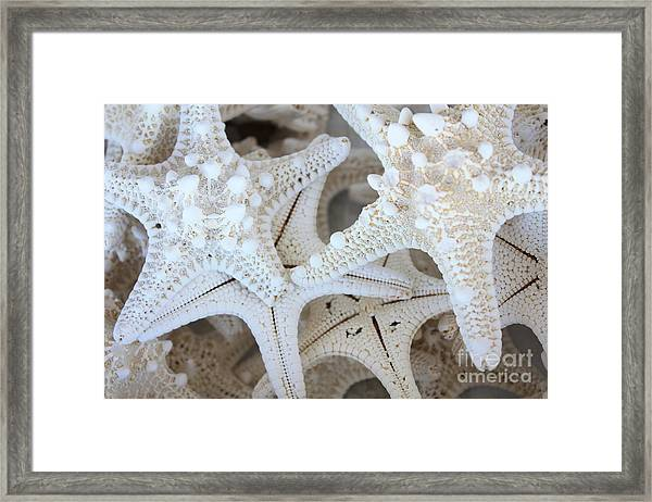 White Starfish Framed Print