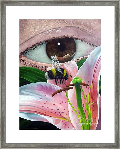 White Tailed Bumble Bee Upon Lily Flower Framed Print