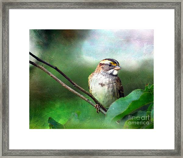 White-throated Sparrow Framed Print