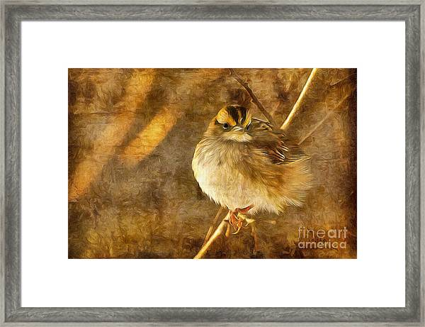 Framed Print featuring the photograph White Throated Sparrow by Lois Bryan