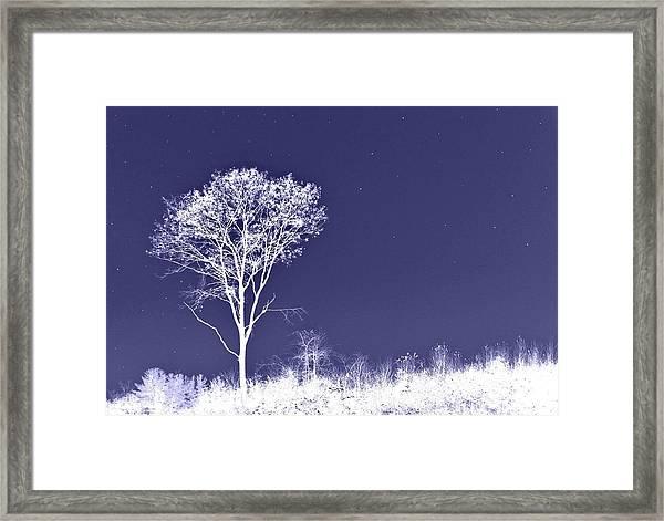 White Tree - Blue Sky - Silver Stars Framed Print