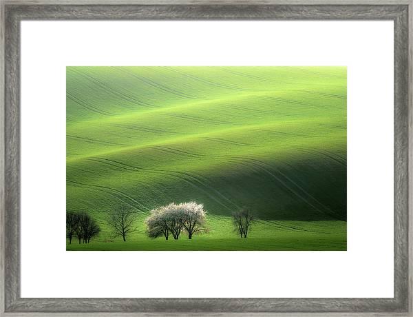White Trio Framed Print by Marek Boguszak