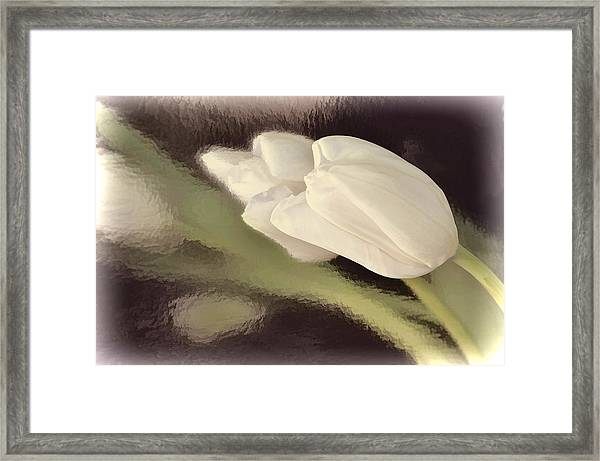 White Tulip Reflected In Misty Water Framed Print