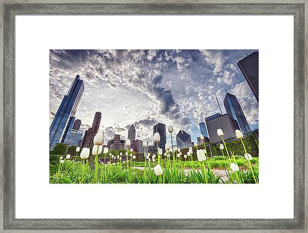 White Tulips And Skyline Framed Print by By Ken Ilio
