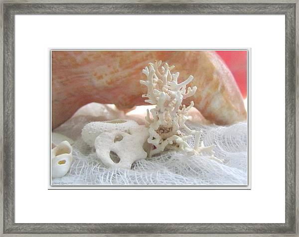White Urchin Light Pink Corals And Conch Seashell Framed Print