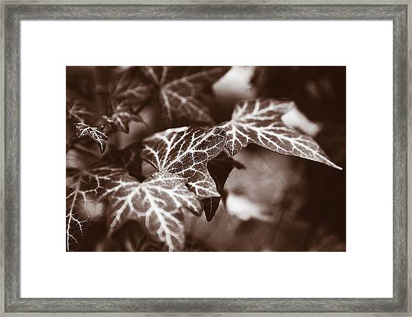 White Veins Framed Print
