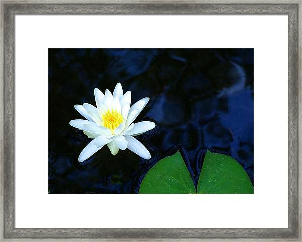 White Water Lilly Abstract Framed Print by Judith Russell-Tooth
