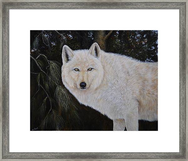 White Wolf In The Woods Framed Print