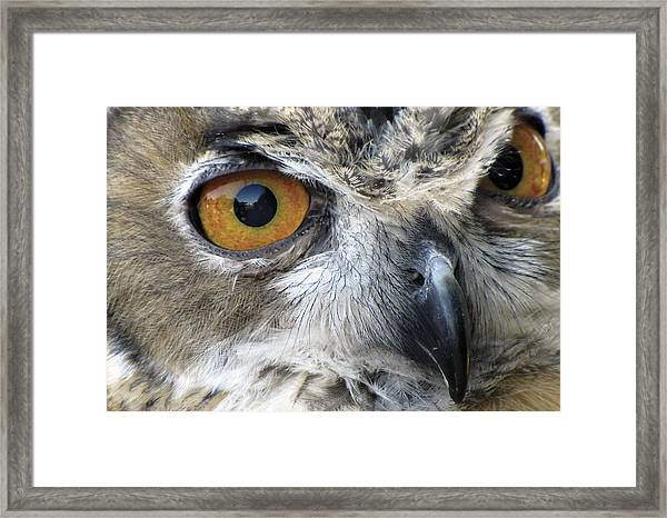 Framed Print featuring the photograph Who by Bob Slitzan