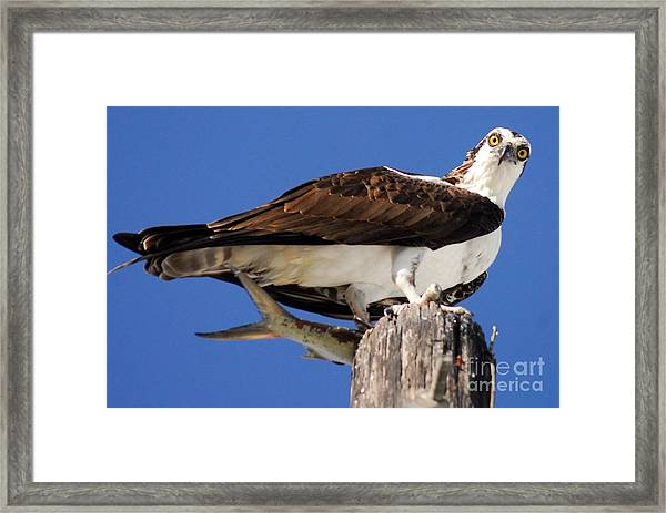 Who's There Framed Print
