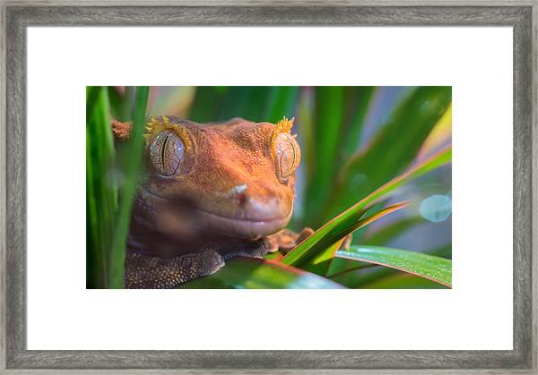 Why Hello0 Framed Print