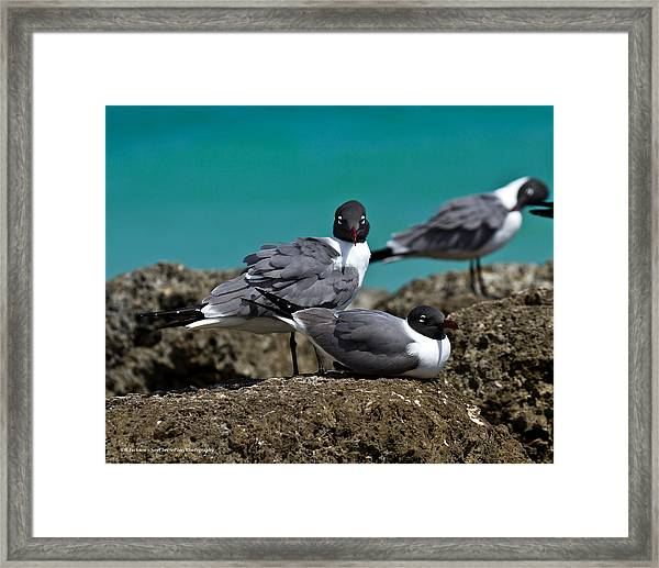 Why You Looking? Framed Print