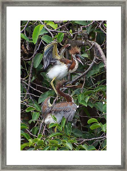 Wild And Crazy Framed Print