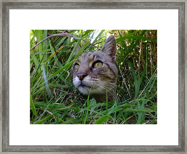 Wild Beast In The Long Grass Framed Print