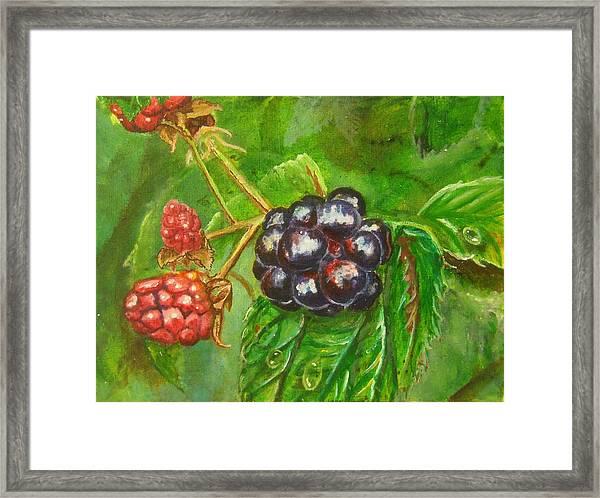Wild Blackberries Framed Print