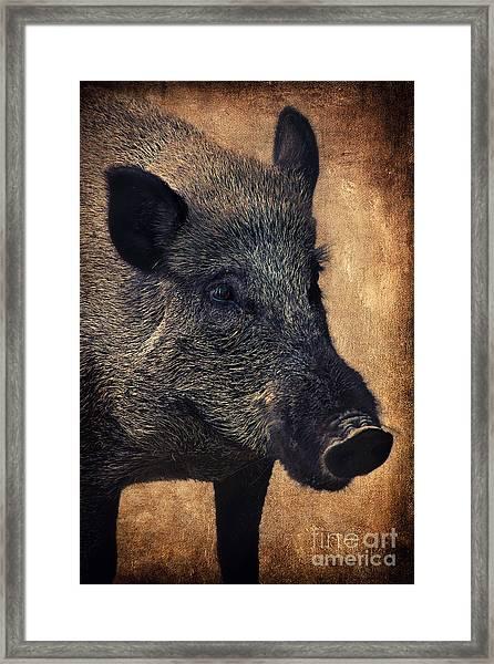 Wild Boar  Framed Print