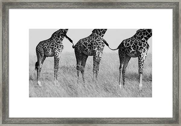 Wild Connection Framed Print