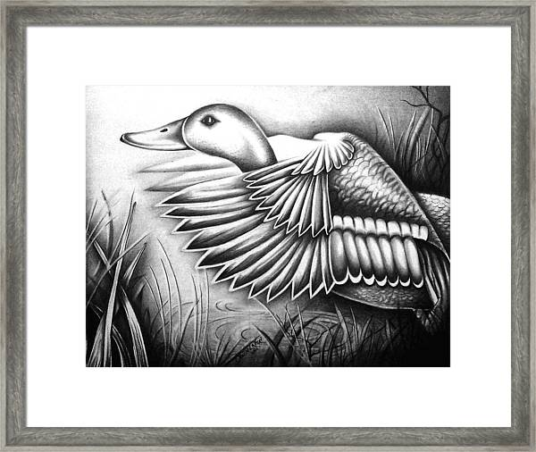 Wild Duck Framed Print