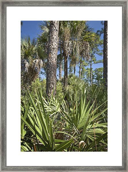 Wild Fl 1 Framed Print