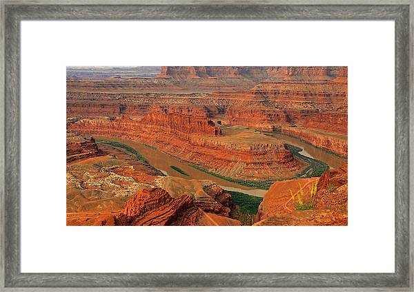 Wild Flowers At Dead Horse Point. Framed Print