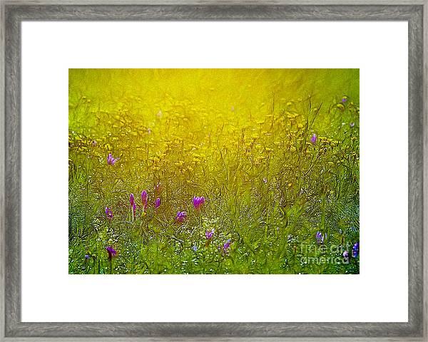 Wild Flowers In Morning Light Framed Print