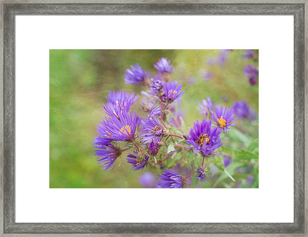 Wild Flowers In The Fall Framed Print