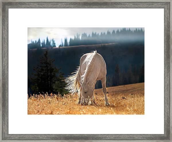 Wild Horse Cloud Framed Print