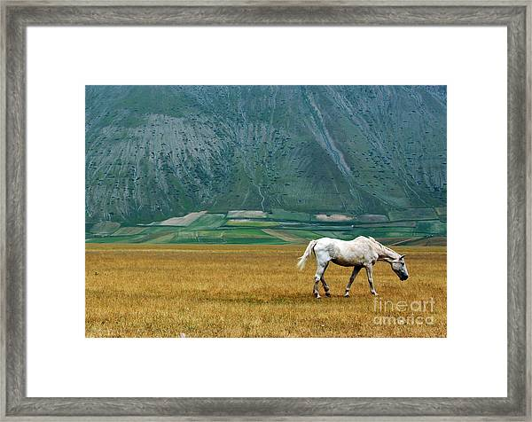 Wild Horse Framed Print