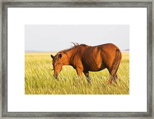Wild Mustand On The Tidal Flats Framed Print