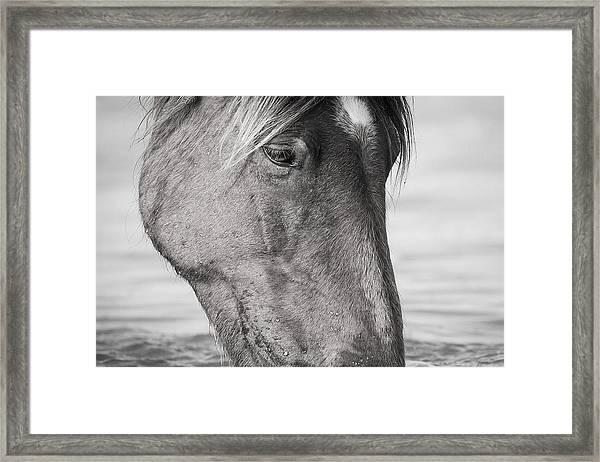 Wild Mustang Feeding Framed Print
